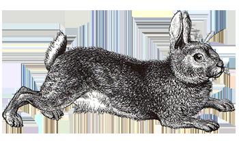 Stitch, Rabbit, Run – In which Rosie mostly talks about ...
